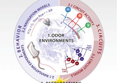 Infographic: Memory / Odor Study